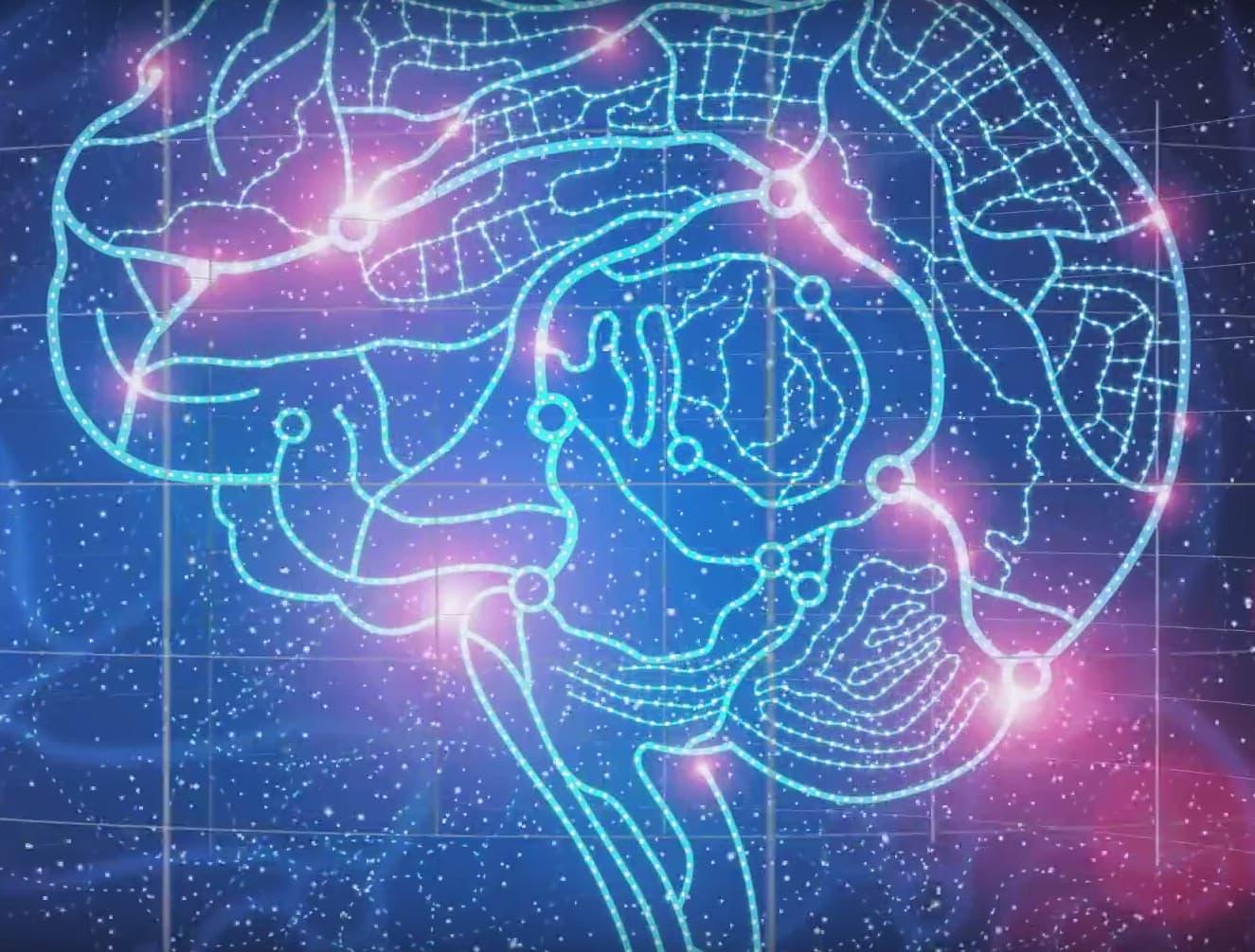 3D Atlas of the human brain