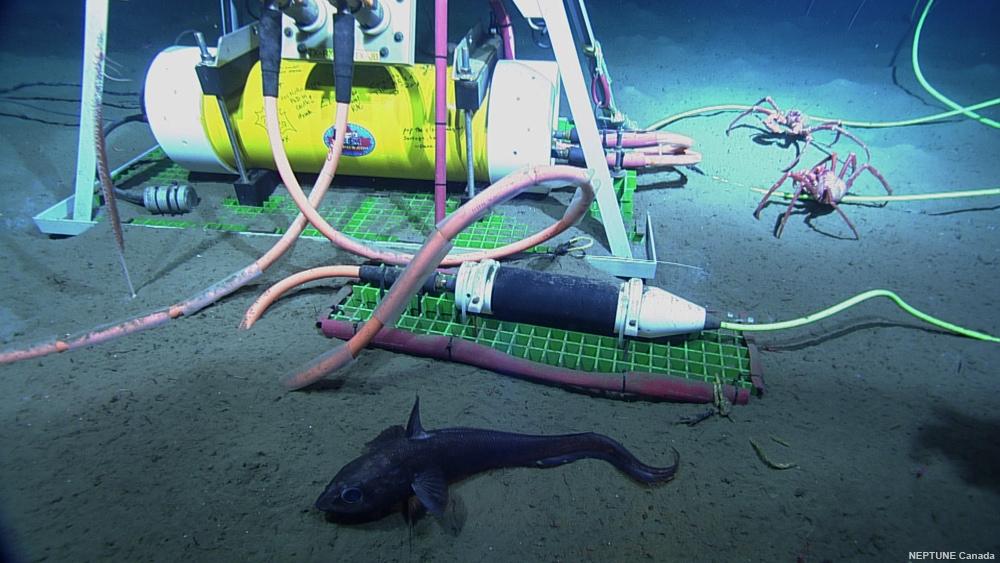 Undersea sensor network