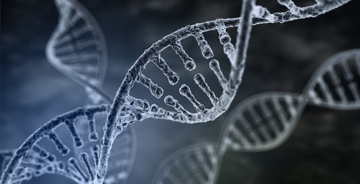 Human DNA strand