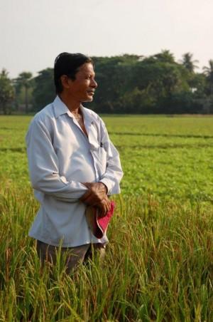 Farmer in rice paddy